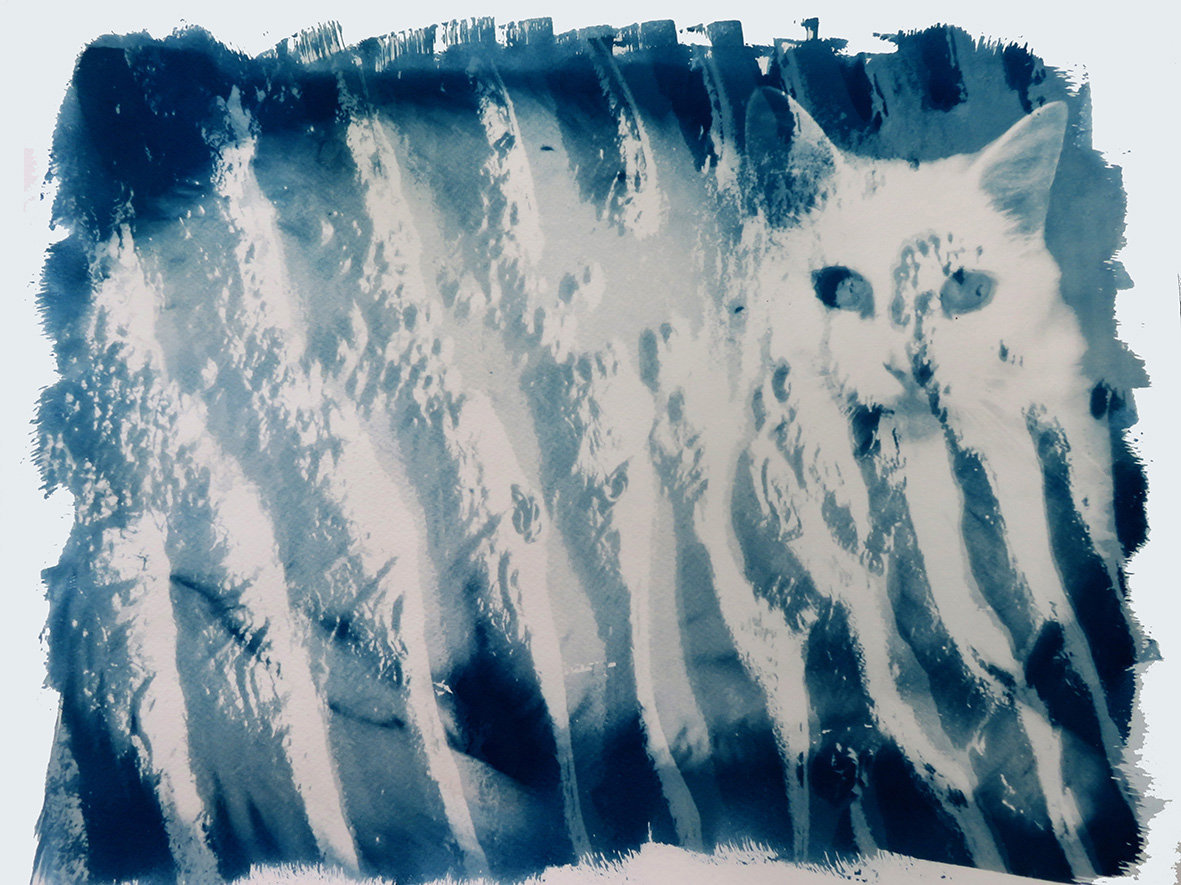 Cyanotype Catwaves