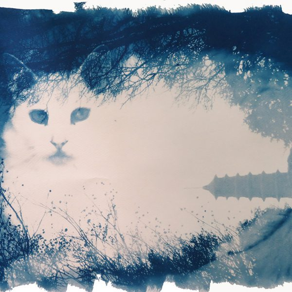 Cyanotype Catscape