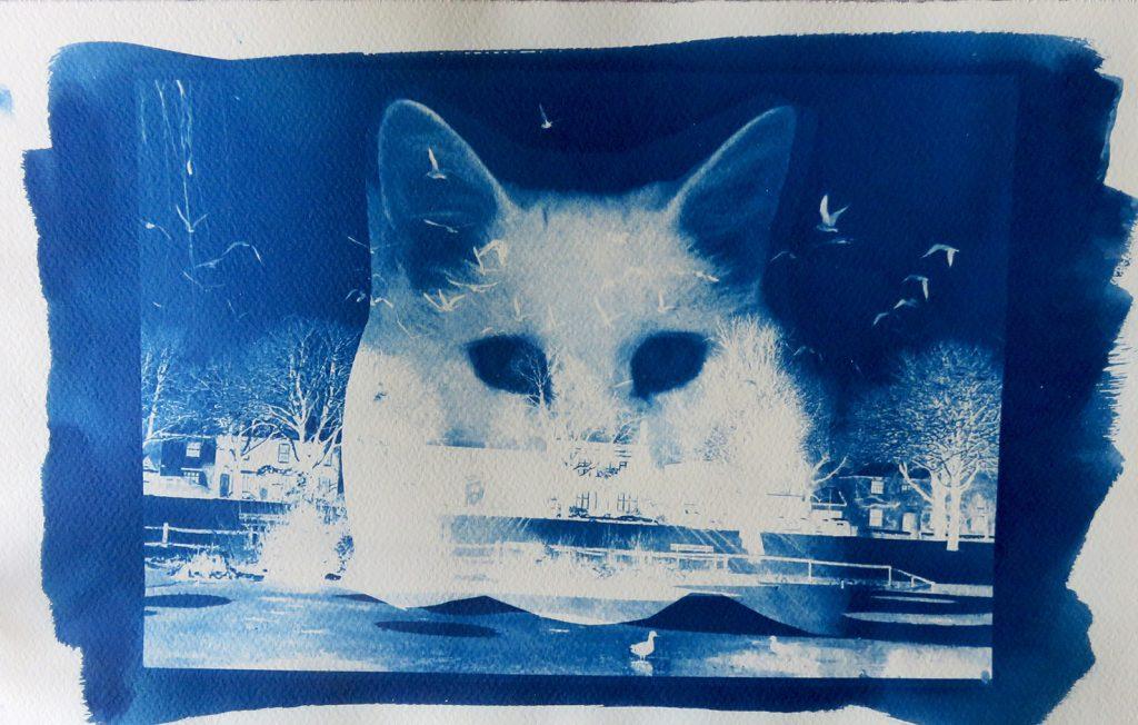 Cat Dreams Cyanotype