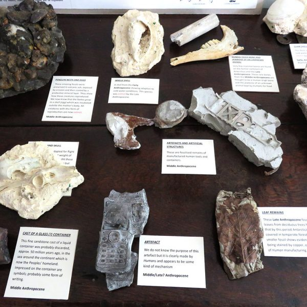 Fossils Detail 1
